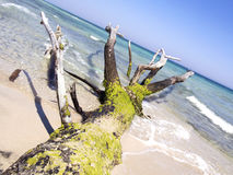 Tree trunk on the beach by the sea Stock Photo