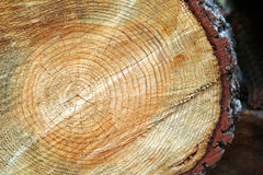 Tree trunk after being cut. Background Royalty Free Stock Images