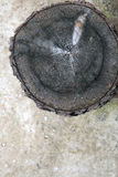 Tree trunk after being cut Stock Image