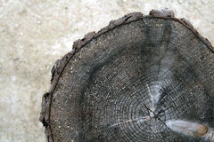 Tree trunk after being cut Royalty Free Stock Photography