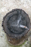 Tree trunk after being cut Stock Images