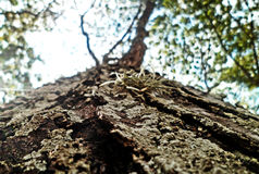 Tree. The trunk of a tree from below Royalty Free Stock Photography