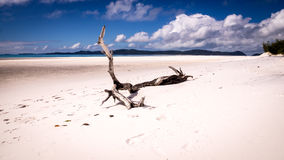 Tree trunk on beutiful white beach. A tree trunk is sitting on white sand on a wide beach at Whitehaven beach, Whitsunday Island, QLD Australia Stock Photography