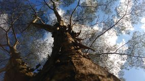 Tree trunk with blue sky and some branches. stock photo