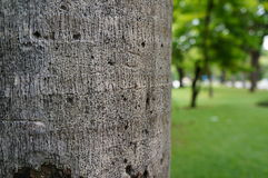 Tree trunk with blurred background Royalty Free Stock Photos