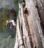 Tree Trunk Stock Photography