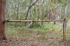 Bush Fencing in Australia royalty free stock photo