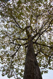 Tree trunk and branches background Royalty Free Stock Photography
