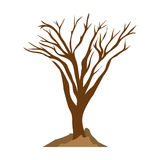 Tree trunk with branchs without leaves Royalty Free Stock Photos