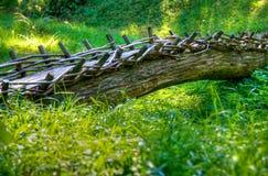 Tree trunk bridge stock images
