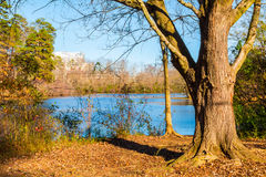 Tree trunk and Candler Lake in Lullwater Park, Atlanta, USA. The tree on the shore of Candler Lake in the Lullwater Park in sunny autumn day, Atlanta, USA Stock Photo