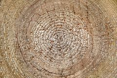 Tree trunk circles Stock Photo