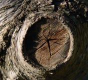 Tree trunk close-up stock image