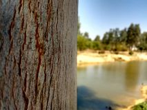 Tree Trunk afternoon. Tree trunk in park in afternoon summer by lake picnic peace Stock Photo
