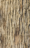 Tree trunk close-up Royalty Free Stock Photos