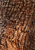 Tree Trunk Stock Images