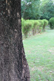 Tree trunk,closed up at tree trunk on natural baclground Royalty Free Stock Images