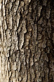 Tree trunk Royalty Free Stock Photos