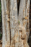 Tree trunk. Closeup of big tree trunk Royalty Free Stock Photography