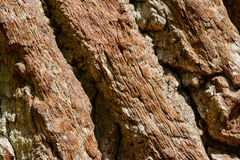 Tree trunk Royalty Free Stock Photography