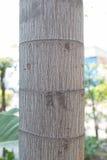 Tree trunk closeup Royalty Free Stock Photo