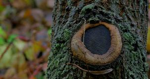 Tree trunk closeup in rain forest.  stock video footage