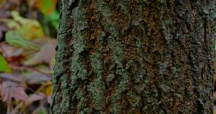Tree trunk closeup in rain forest stock video footage