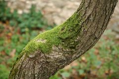 Tree Trunk Closeup royalty free stock photography