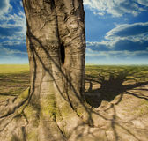 Tree trunk and clouds Royalty Free Stock Image
