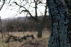 Tree trunk covered with bark in garden on a blurred background. Tree trunk covered with bark on a blurry, natural background Nature detail with a fall landscape Stock Photo