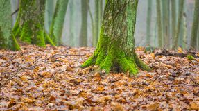 Tree trunk covered by green moss Royalty Free Stock Image