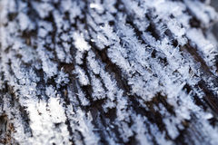 Tree trunk covered with ice crystals, close up, selective focus Royalty Free Stock Photos