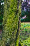 Tree trunk covered in intensively green moss Stock Photo