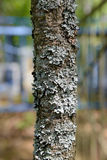tree trunk covered with lichen Stock Photo