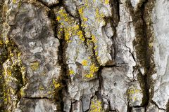 Tree trunk covered by moos Royalty Free Stock Photos