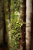 Tree trunk covered in moss Stock Photography