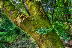 Tree trunk covered in moss in the forest Stock Image
