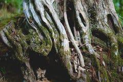 Tree Trunk Royalty Free Stock Photos