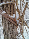 Tree trunk covered in snow Royalty Free Stock Images