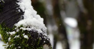 Tree trunk covered with snow. During winter stock video