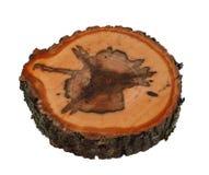 Tree trunk cross cut wood texture stock image
