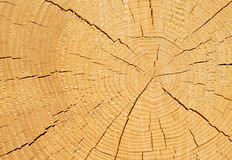 Tree trunk cross section Stock Photos