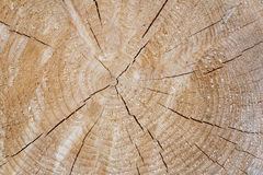 Tree trunk cross section with annual rings Stock Photo
