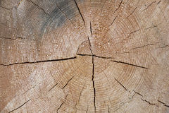 Tree trunk cross section with annual rings Royalty Free Stock Photography