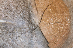 Tree trunk cross section with annual rings Stock Images