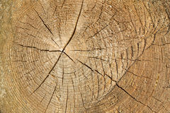 Tree trunk cross section with annual rings Stock Photos