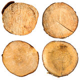 Tree trunk cross section set Stock Images