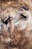 Abstract facial features in tree trunk cross section stock photography