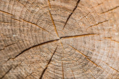 Tree trunk cross section Stock Image