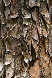 Tree trunk crust Royalty Free Stock Photography